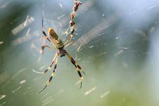 Free Illusionist Spiders Stock Photos - 2724763