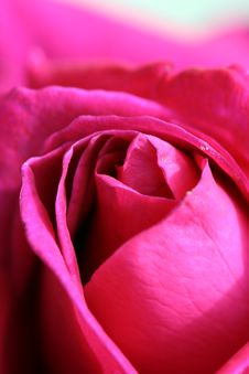 Close-up Of Red Rose Stock Photo
