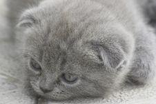 Free Sad Kitten Royalty Free Stock Photography - 2724847