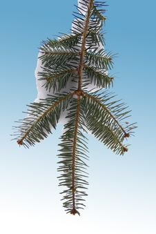 Free Winter Pine Royalty Free Stock Photography - 2725307