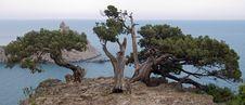 Free Tree On Rock Stock Photography - 2725352