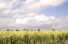 Free Wheat Field, Hertfordshire 2 Stock Photos - 2726893