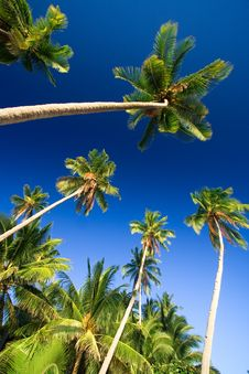 Free Tropical Palm Tree Paradise Stock Photo - 2727220