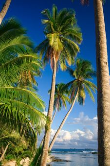 Tropical Beach Paradise View Royalty Free Stock Images