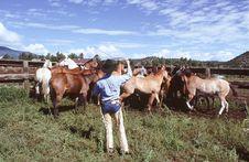 Free Horse Roundup Stock Photo - 2727600
