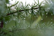 Water Droplets Stock Photos