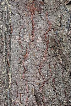 Free Bark Texture Stock Image - 27200331