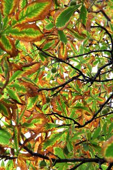 Free Autumn Leaves Stock Photography - 27200422