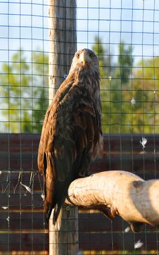 Free Eagle Sits On Wooden Log Royalty Free Stock Photos - 27206598