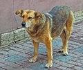 Free Sad Dog Stock Photo - 27215670