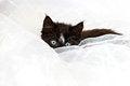 Free Kitten Peeping Over White Fabric Royalty Free Stock Photos - 27215718