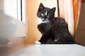 Free Kitten Sitting On A Window Ledge Stock Images - 27215754