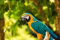 Free Blue And Yellow Macaw Stock Photos - 27219223