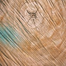 Free Cut Of Wood Background Stock Image - 27210141