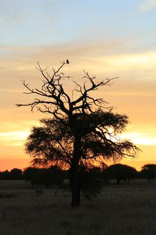 Free African Sunset - Raptor Rest Royalty Free Stock Photo - 27212955