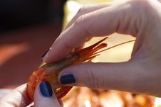 Shrimp In Hands Stock Photography