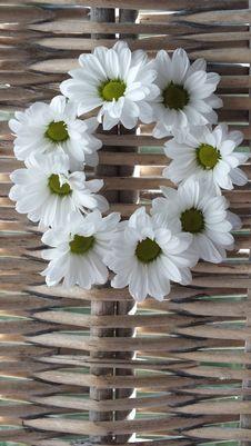 Free Daisy Wreath Royalty Free Stock Photos - 27214248