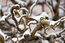 Free Branch Under The Snow Stock Photos - 27215013