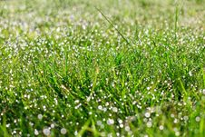 Free Grass With Water Drops Stock Image - 27215621