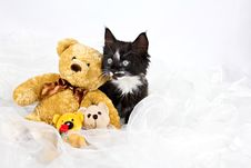 Free Kitten With Teddy Bears Stock Image - 27215801
