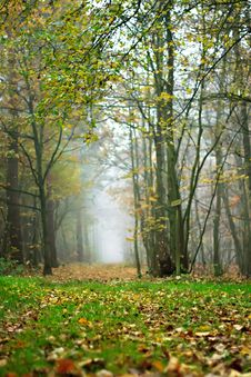 The Forest In Autumn Stock Image