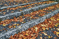 Free Fallen Leaves Stock Photography - 27222832