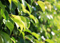 Free Green Leaves Royalty Free Stock Photos - 27224078