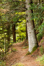 Free Forest Royalty Free Stock Photography - 27226317