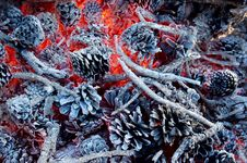 Free Coals Royalty Free Stock Images - 27225629