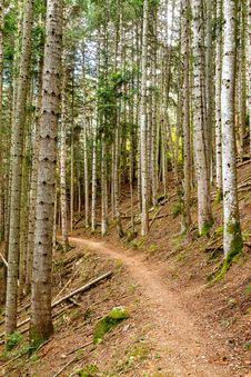 Free Forest Royalty Free Stock Photos - 27226418