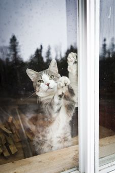 Free I Want To Go Out !!! Royalty Free Stock Photos - 27226668