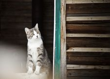 Free Cat Watching Outside ! Royalty Free Stock Image - 27226676