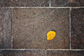 Free Autumn Leaf On The Floor Royalty Free Stock Photography - 27232947