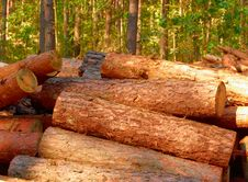 Free Timber Royalty Free Stock Photography - 27237847