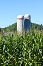 Free Corn Stalks With Two Silos In Background Stock Photography - 27241262