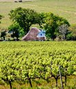 Free Landscape With Vineyard Royalty Free Stock Photos - 27246908