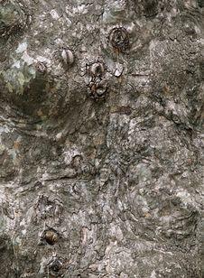 Free Old Tree Royalty Free Stock Image - 27240216