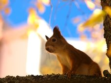 Free Squirrel Stock Photo - 27240710