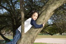 Free Boy In Tree Stock Photo - 27243780