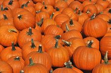 Free Pumpkins Pumpkins2 Stock Images - 27244494