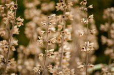 Herbs And Wild Flowers Royalty Free Stock Photography