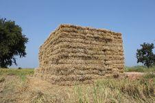 Thailand Rice Straw Briquette. Stock Image