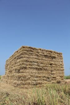 Thailand Rice Straw Briquette. Royalty Free Stock Images