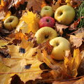 Free Autumn Background - Fallen Apples And Leaves Of Ma Royalty Free Stock Photos - 27255018