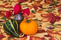Free Autumn Table Decoration Stock Photography - 27258642