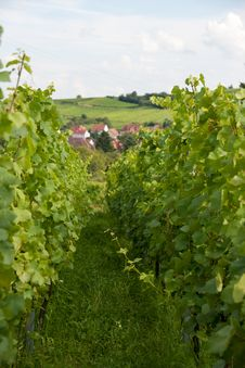 Free Alsace Landscape And Vinewyard Stock Photo - 27252000