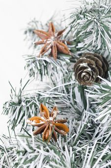 Free Spruce Branches, Pine Cones And Star Anise Stock Images - 27253284