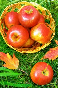 Free Apples In A Basket Stock Image - 27255741