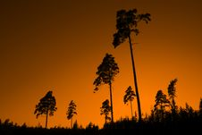 Free PINE TREE SUNSET Stock Photos - 27256713