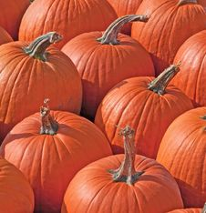 Free Pumpkins Royalty Free Stock Photo - 27257775